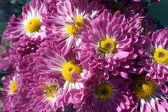 Fleurs pourprées et roses Photo libre de droits