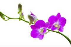 Fleurs pourprées lumineuses Photographie stock libre de droits