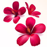 Fleurs pourprées réalistes de vecteur Photos libres de droits