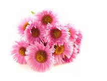 Fleurs pourprées sur le blanc Photo stock