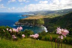 Fleurs pourprées sur une falaise par l'océan Image stock