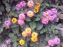 Fleurs pourprées Usine exotique, fleurs exotiques Fleurs colorées Photo stock