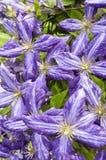 Fleurs pourpres, arborétum de Wilmington Photos libres de droits