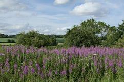 Fleurs pourpres au parc avec le ciel et les arbres Photographie stock libre de droits