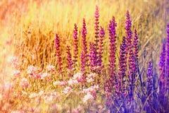 Fleurs pourpres au printemps Images libres de droits