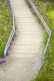 Fleurs pourpres avec la voie en bois Image stock