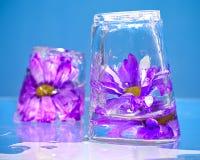 Fleurs pourpres congelées en glace Photo stock