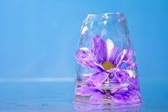 Fleurs pourpres congelées en glace Photos libres de droits