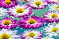 Fleurs pourpres dans l'eau azurée bleue, fond de nature, papier peint Image libre de droits