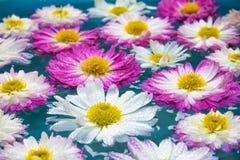 Fleurs pourpres dans l'eau azurée bleue, fond de nature, papier peint Photographie stock libre de droits