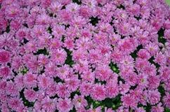 Fleurs pourpres dans le groupe Image stock