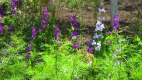 Fleurs pourpres dans le parterre parmi l'herbe Photographie stock