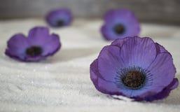 Fleurs pourpres dans le sable photos stock
