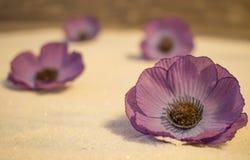 Fleurs pourpres dans le sable photographie stock libre de droits