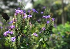 Fleurs pourpres de fleur et papillon noir en parc Images libres de droits