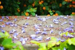 Fleurs pourpres de jacaranda sur le mur en pierre photos stock