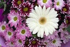 Fleurs pourpres de ressort dans le jardin Photo stock