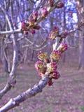 Fleurs pourpres de ressort sur un fond de forêt Photo stock