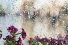 Fleurs pourpres derrière la fenêtre humide avec des baisses de pluie, bokeh brouillé de rue Concept de temps de ressort, saisons, Image stock
