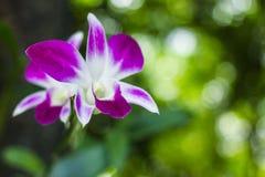 Fleurs pourpres en nature sauvage image libre de droits