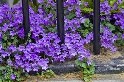 Fleurs pourpres en parc image stock