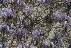 Fleurs pourpres et mur en pierre photographie stock libre de droits
