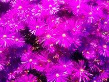 Fleurs pourpres exotiques Photo libre de droits
