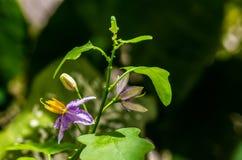 Fleurs pourpres naturelles Photo libre de droits