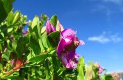 Fleurs pourpres parmi le vert photos libres de droits