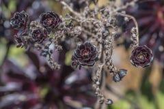 Fleurs pourpres petites Images libres de droits