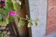 Fleurs pourpres, plante verte Photo stock
