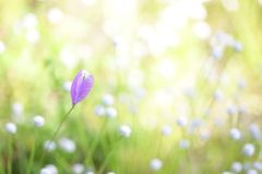 Fleurs pourpres sauvages Photographie stock