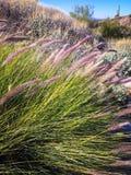 Fleurs pourpres sur la traînée de désert Images libres de droits