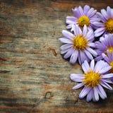 Fleurs pourpres photos stock