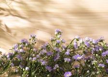 Fleurs pourpres sur un fond en bois ensoleillé Photos libres de droits