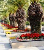 Fleurs près de route Images libres de droits
