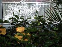 Fleurs prêtes pour l'hiver Images stock