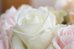 fleurs proches vers le haut photographie stock libre de droits