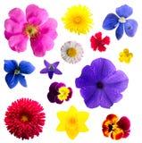 fleurs réglées Photo stock