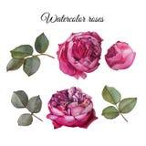 Fleurs réglées des roses et des feuilles d'aquarelle illustration de vecteur