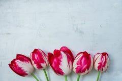 Fleurs rayées rouges et blanches de tulipes sur le fond de Grey Stone Concrete Cement Metal Jour du ` s de femmes du ` s de mère  photographie stock