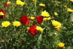 Fleurs romantiques Photo libre de droits