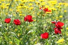 Fleurs romantiques Photographie stock