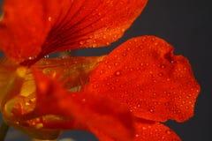 Fleurs romantiques Image stock