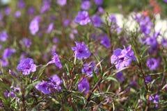 Fleurs romantiques Image libre de droits