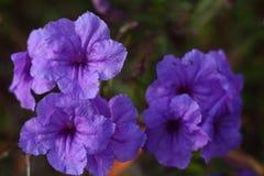 Fleurs romantiques Photographie stock libre de droits
