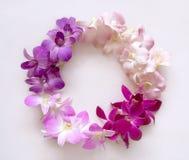 Fleurs rondes d'orchidée de guirlande de cadre Image stock