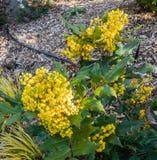 Fleurs rondes jaunes Photo libre de droits
