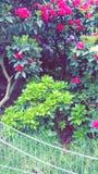 Fleurs rosâtres Photographie stock