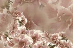Fleurs rose-gris-brunes de roses de vintage Drapeau des fleurs Background collage floral Composition de fleur Photos stock